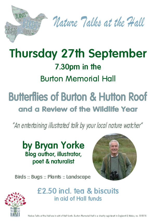 Butterflies of Hutton Roof and catch up