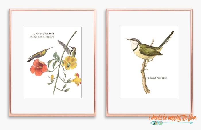 Warbler Printable