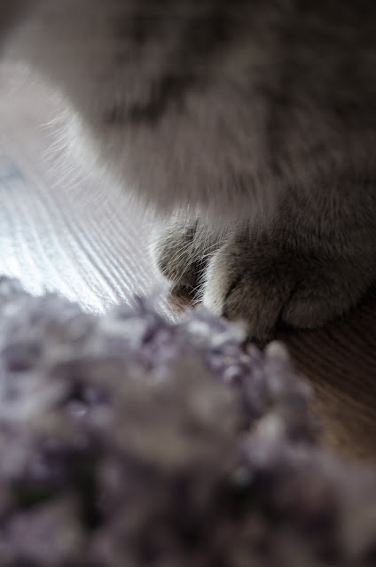 bzy   kot   wiosna