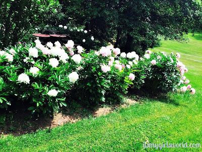 Ontario flowers