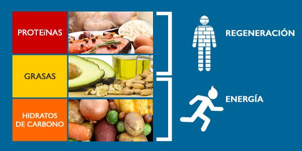 ¿Qué son los carbohidratos, proteínas y grasas?-SitioFitness
