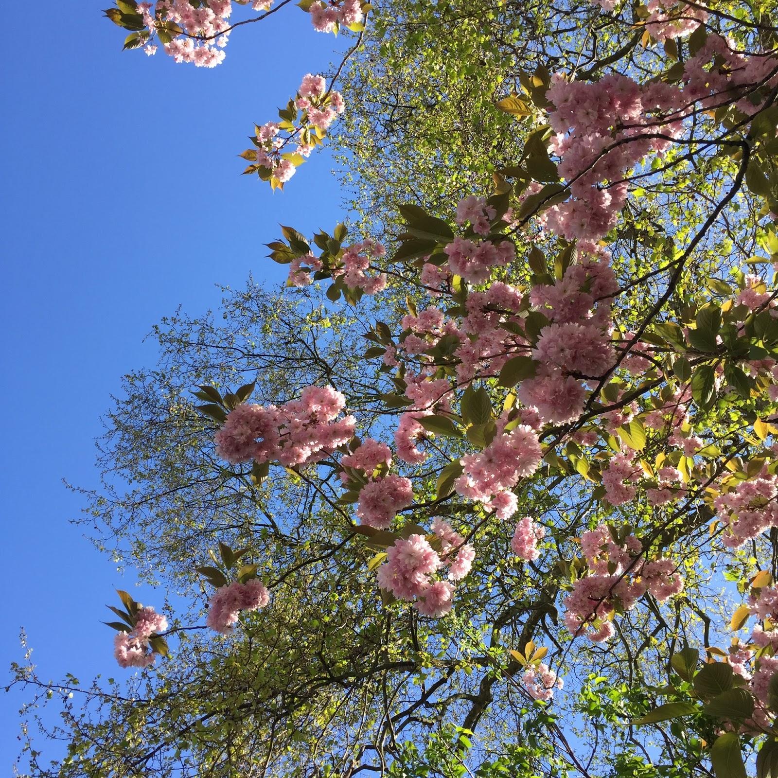 London blossom