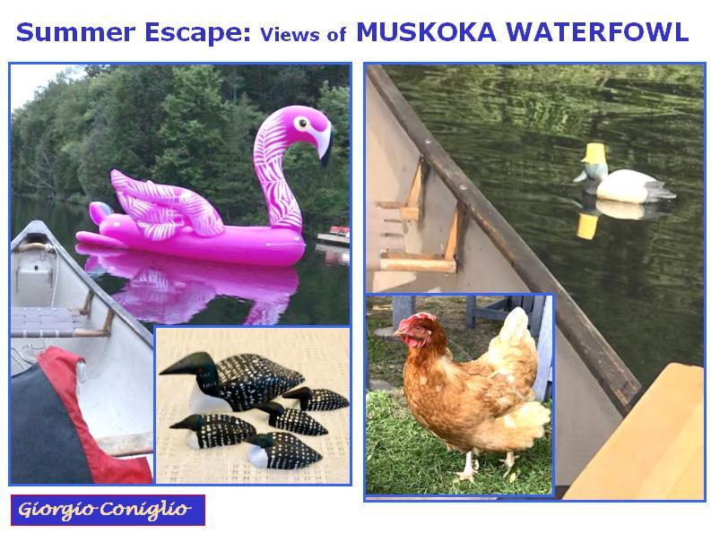 spoof; photographhy; waterfowl; plastic; ersatz; Muskoka; Ontario; canoe; loon; swan; Giorgio Coniglio