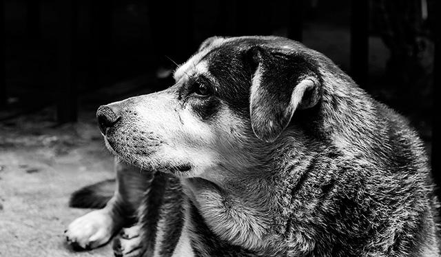 Retrato ByN de perfil de un perro.