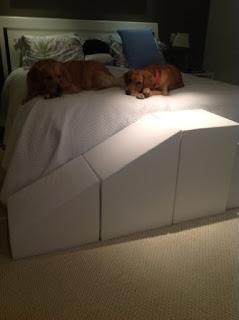 cães e o suor