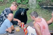 Extreme! The Family Picnic and Eat with the Bears