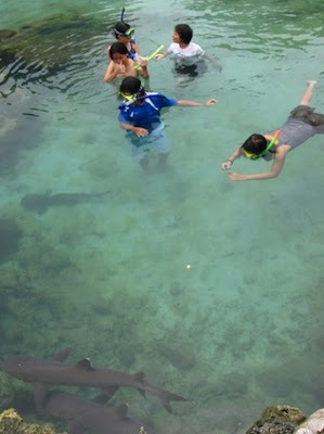 Swim with sharks at Karimunjawa Island
