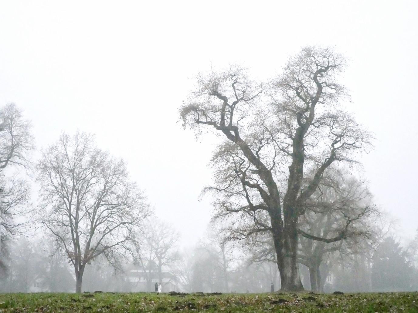 Eichenbaum im Nebel