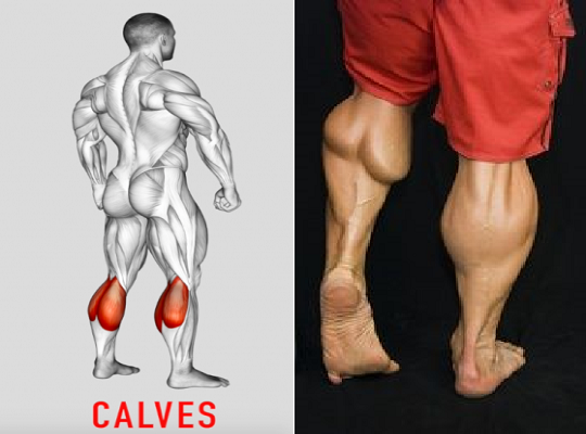 5 of the Best Exercises for a Calves Workout