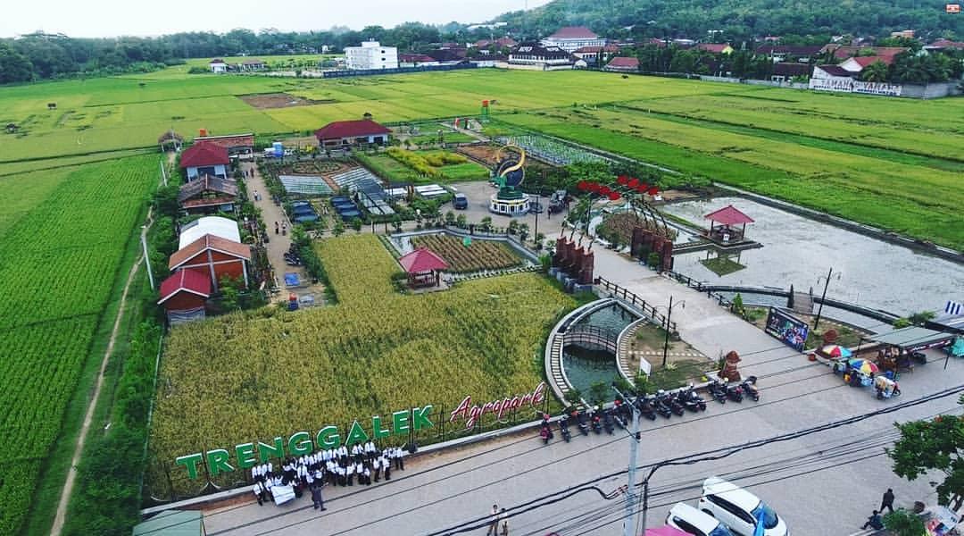 Suasana menghijau dengan hamparan sawah pertainan padi diAgropark Trenggalek