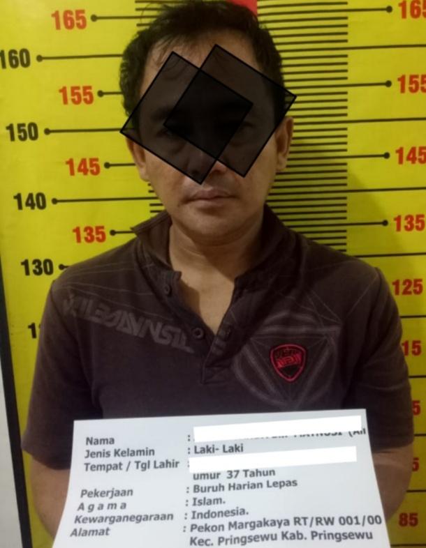 Tim Cobra Sat Narkoba Polres Pringsewu Membekuk Seorang Pengedar Narkotika Jenis Sabu Warga Margakaya