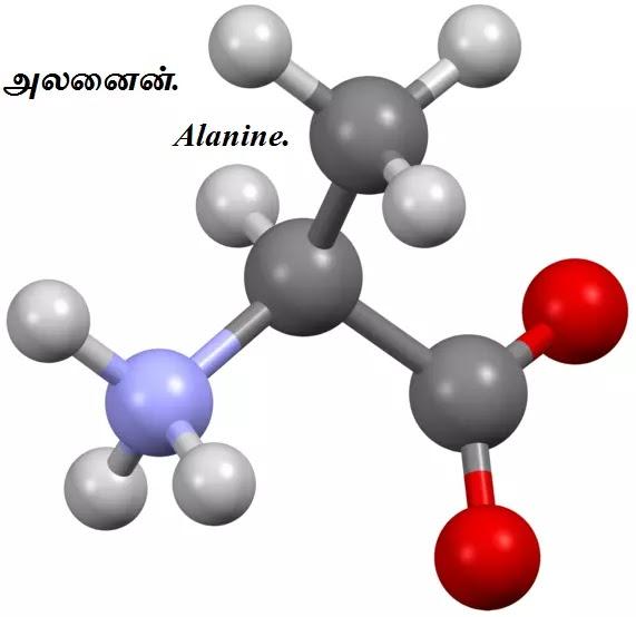 அமினோ அமிலங்கள் - Amino Acids - Part 3.
