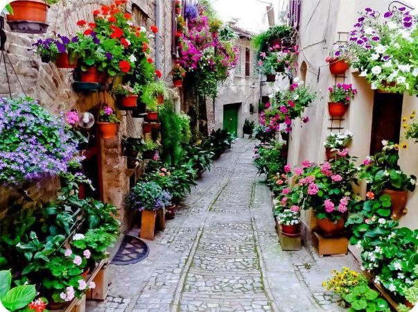Tips Menanam Dan Merawat Bunga Gantung Teori Petani