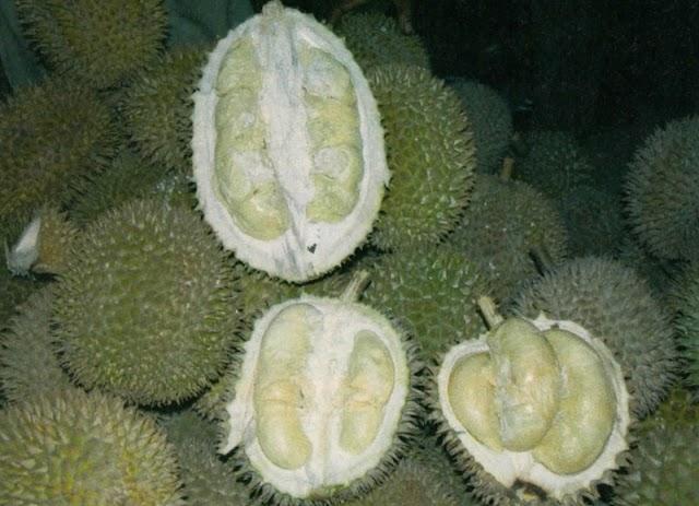 Jalan Jalan Di Pandeglang Surga para Penikmat Durian