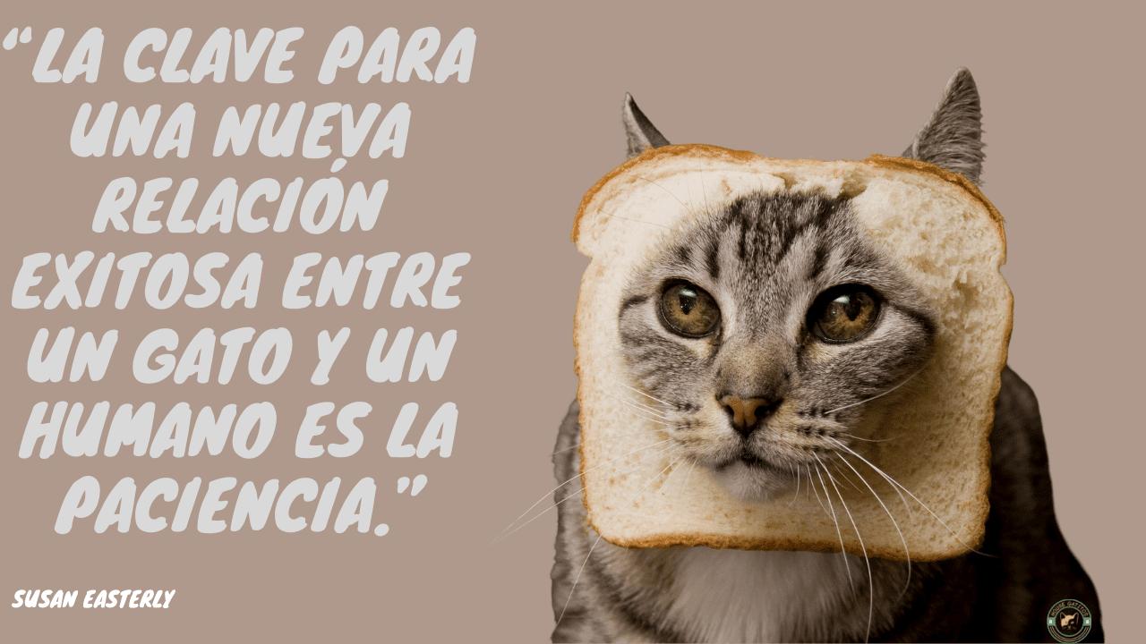 Los gatos lo tienen todo