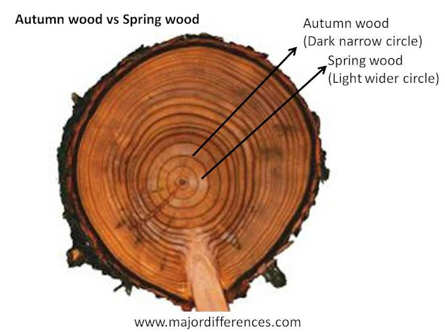 Spring Wood vs Autumn Wood