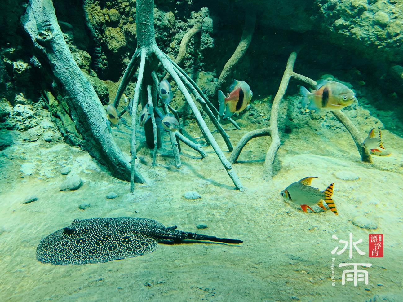 Xpark水族館|雨林探險