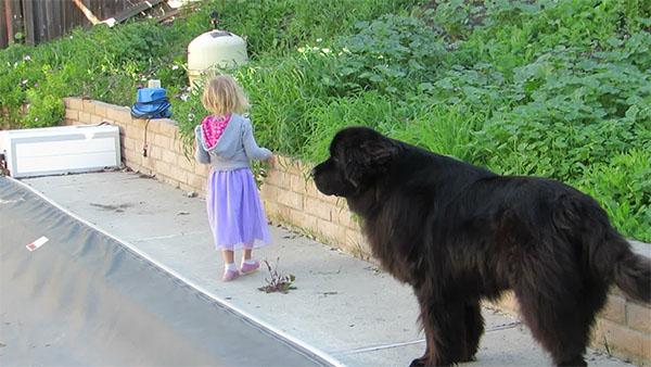 Un chien vigilant protège cet enfant près de la piscine.