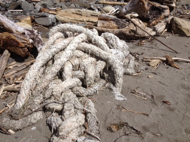 A knot of four inch diameter rope washed up on the beach