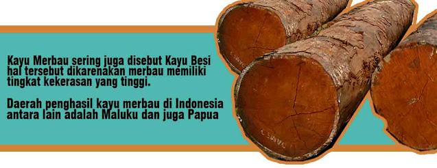 informasi mengenai kayu merbau papua