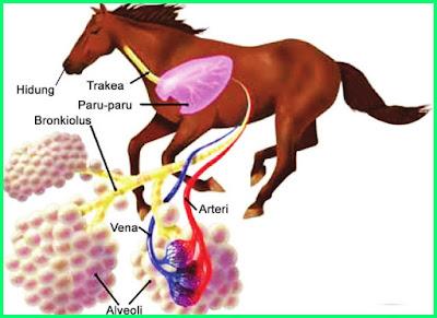 materi pelajaran kelas 5 sd tema 2 sistem pernapasan pada kuda