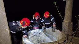O căţeluşă şi puii săi, slavaţi de pompierii din Calafat dintr-o fântână