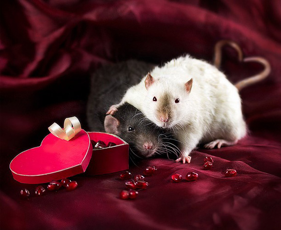 Extremely cute valentines day animals funny and cute animals - Valentine s day animal pics ...