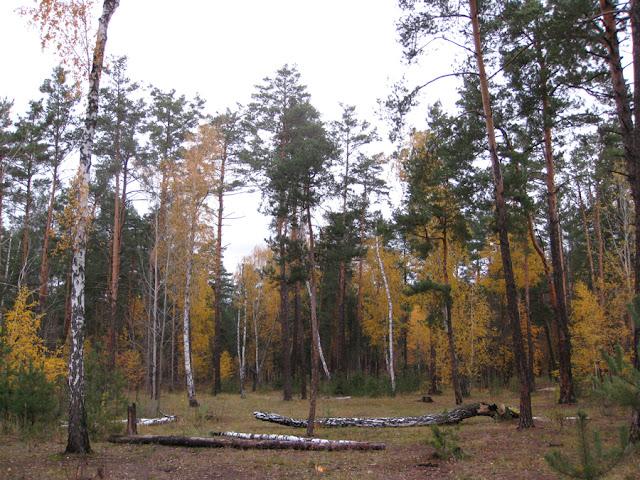 Фото Виталия Бабенко: поляна осенью