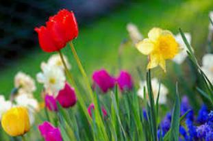 Few Lines on Spring Season