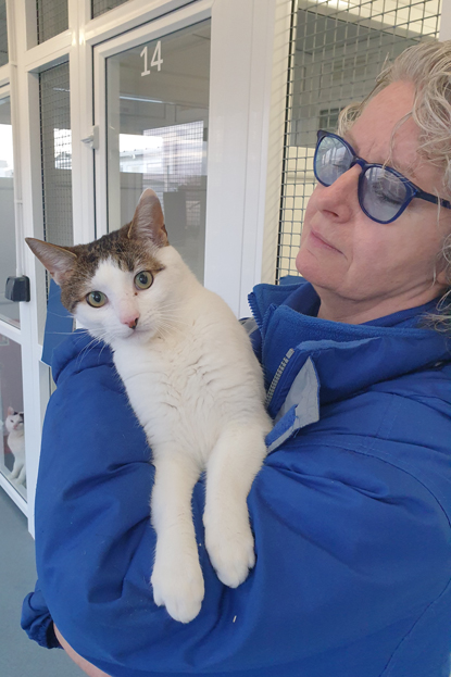 Cats Protection volunteer holding tabby and white cat