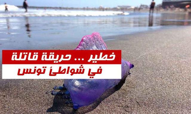 حريقة قاتلة في شواطئ تونس
