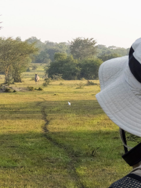 Watching an eland on a walking safari in Lake Mburo National Park in Uganda