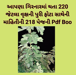 TREES IN GIRNAR 220 TREES PHOTOS WITH DETAILS