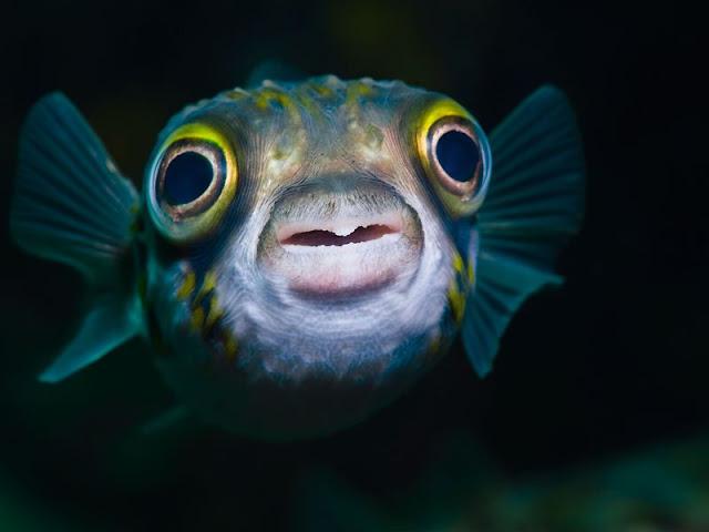 Sick fish treatment