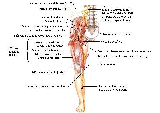 Como prevenir o coágulo sanguíneo após lesão no joelho