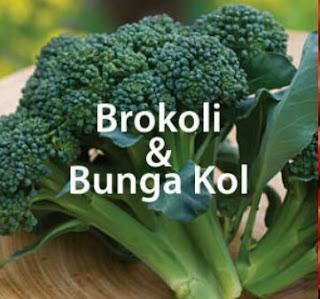 Teknis Budidaya Brokoli & Bunga Kol