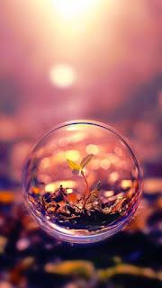 صورة نبته داخل قطرة مياة ، اجمل خلفيات الواتس