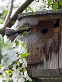Biologischer Pflanzenschutz mit Vögeln, Marienkäfer und sonstigen Helfern im Garten