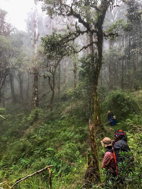Penemuan Gunung Ke-4 Tertinggi Di Malaysia, Gunung Kaingron Tambunan sabah