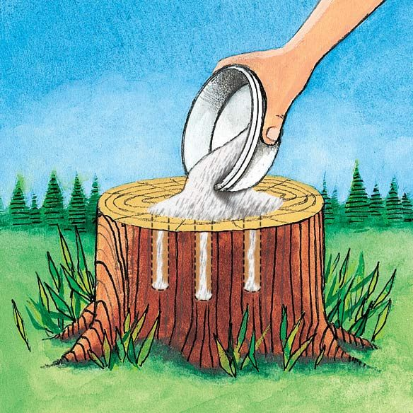 Dont Pin That Epsom Salt to Remove Tree Stumps