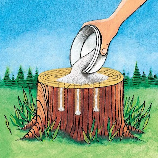 Epsom Salt to Remove Tree Stumps