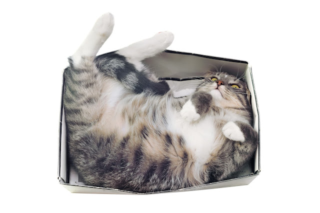 Tabby cat in box #catsinboxes #cute