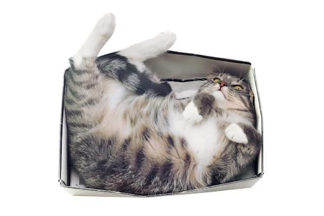 Tabby cat in box #catsinboxes #cute