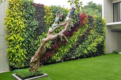 Jasa Pembuatan Taman Tangerang