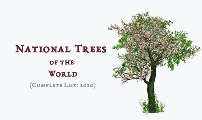 National Trees Around the World