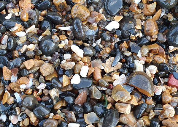Shark's tooth in the shingle