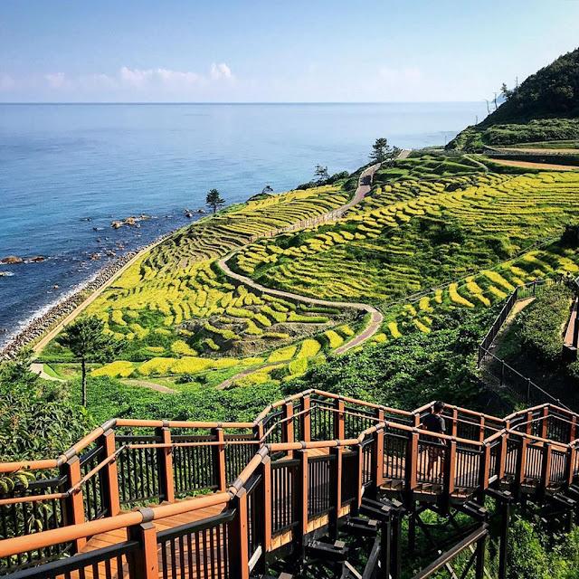 Ruộng bậc thang Shiroyone Senmaida đẹp lịm tim ở Nhật Bản
