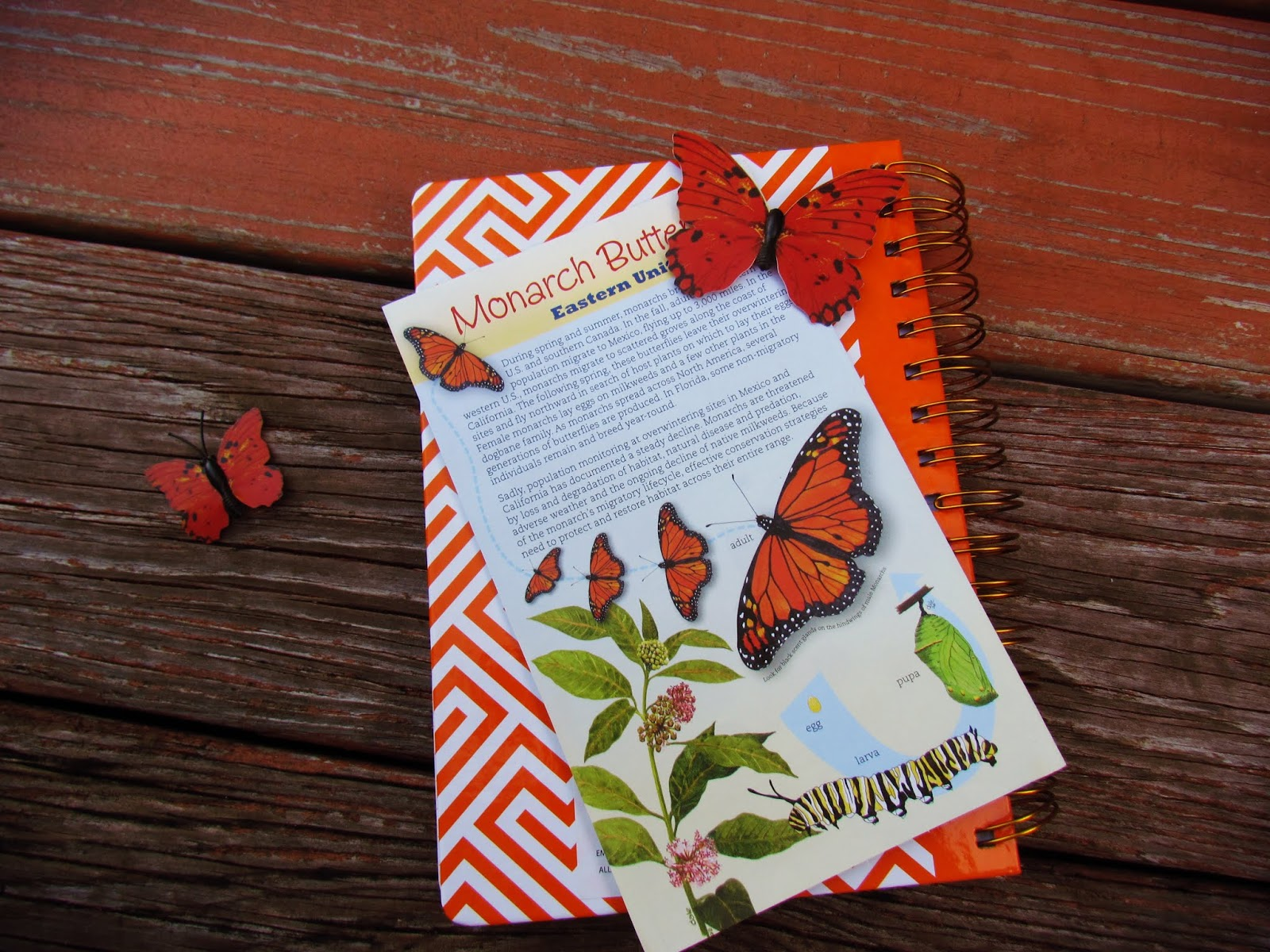 A butterfly flat lay with butterfly garden pamphlet, orange chevron notebook, and butterfly magnets on a wooden plank background