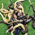Couple Pose With Huge 'Rubber' Snakes In Scary Photoshoot