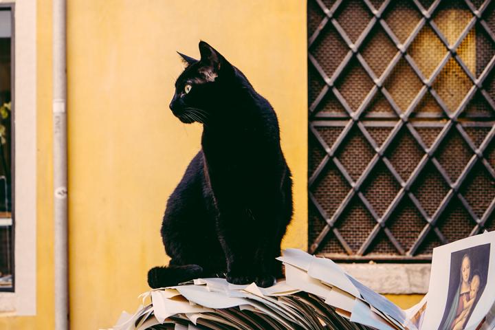 Petua Halau Kucing Buang Najis di Halaman Rumah